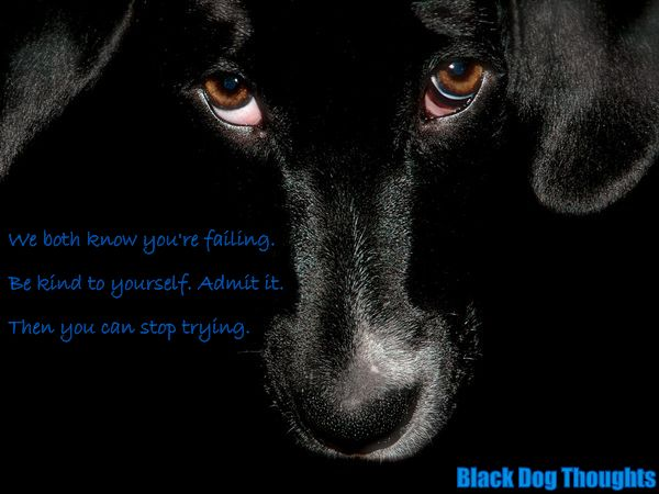 black dog thoughts